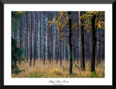 Misty-Blue-Forest-South-East-Poland